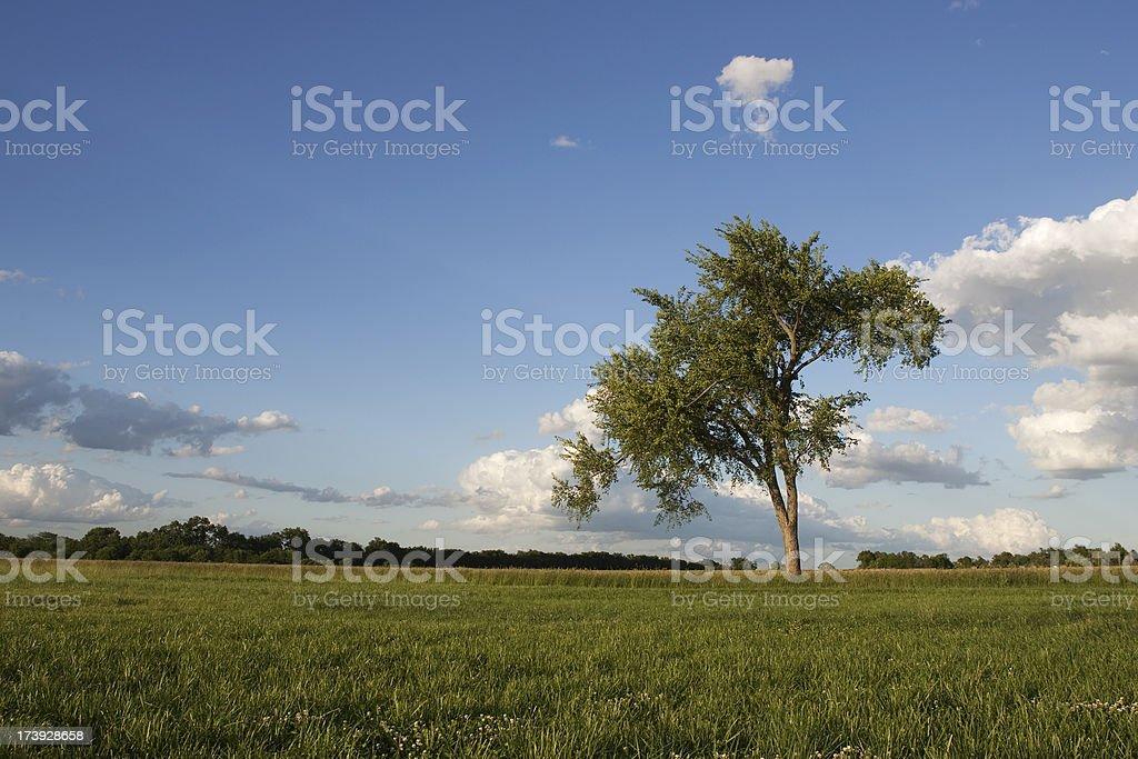 single tree on a prairie stock photo