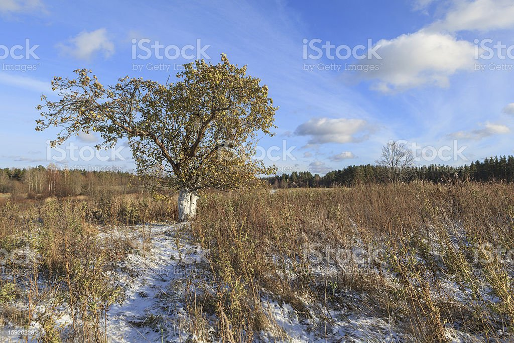 single tree on an autumn field royalty-free stock photo