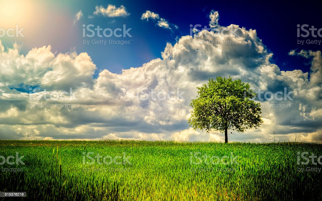 Single Tree on field stock photo
