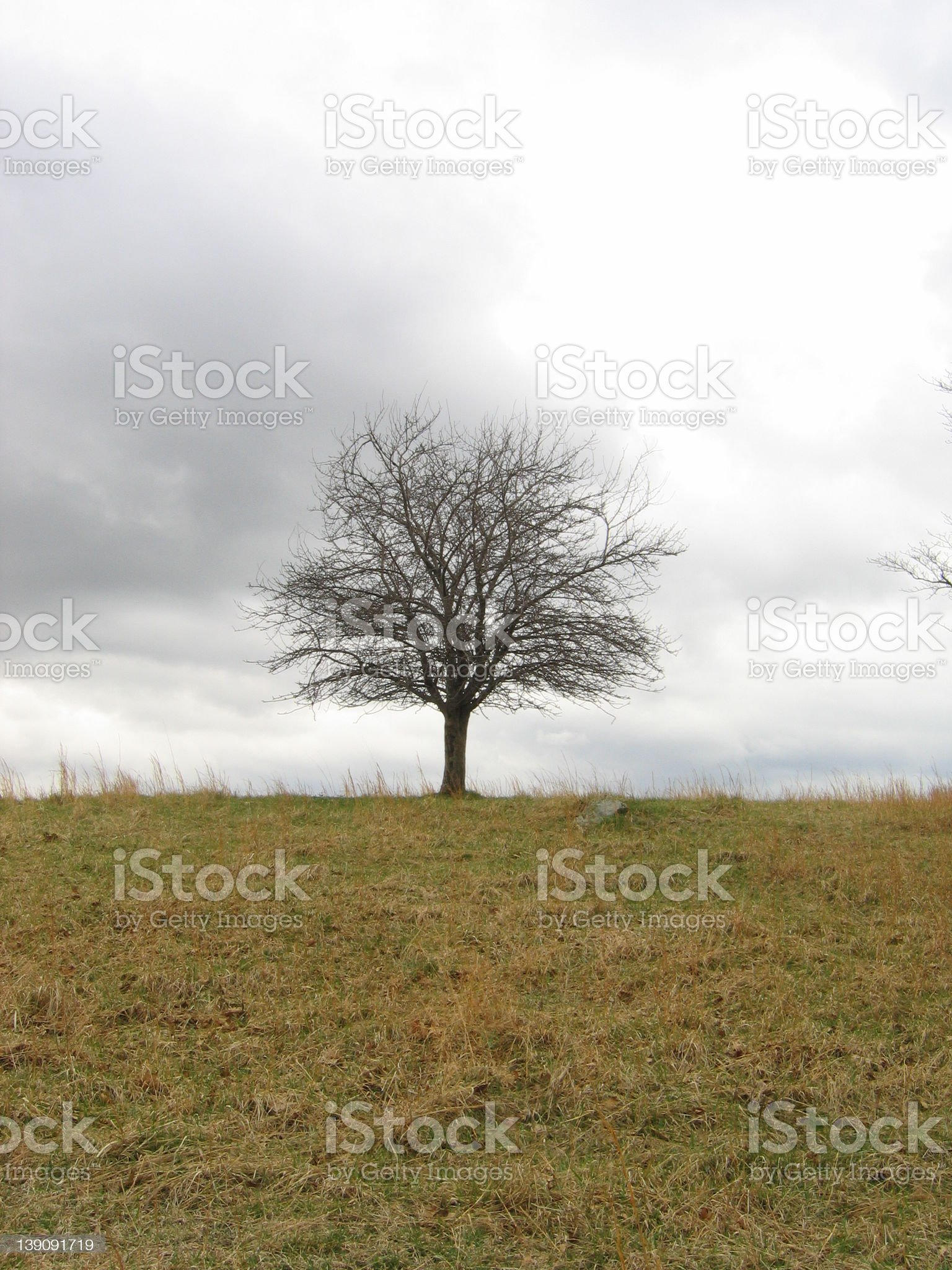 Single tree on hill royalty-free stock photo