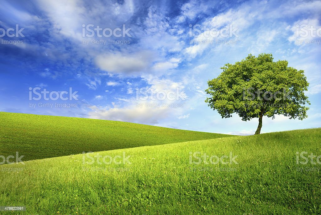 Single tree on top of a green hill stock photo