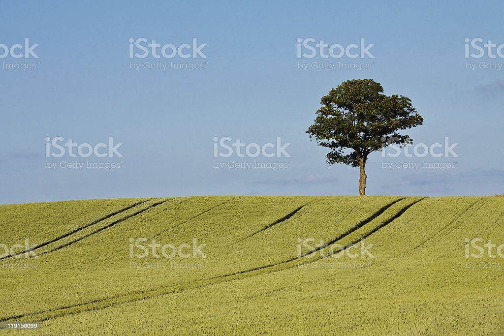 Single tree stock photo