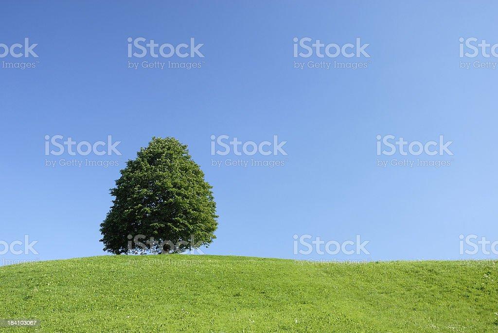 single tree royalty-free stock photo