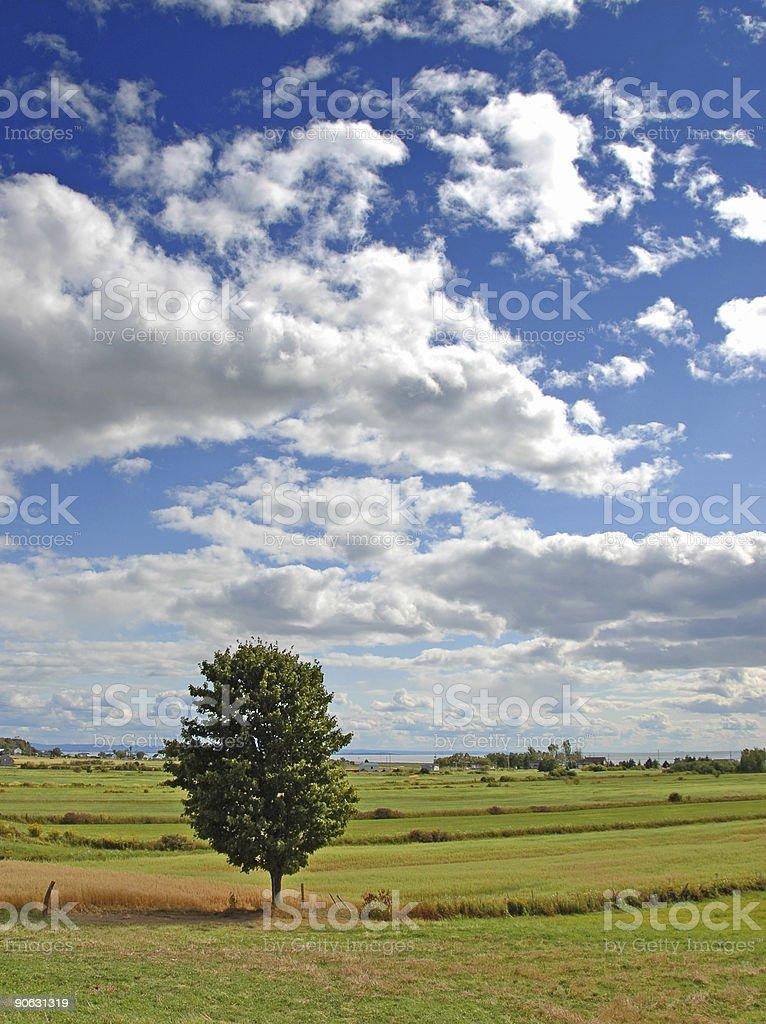 Single tree stock photo