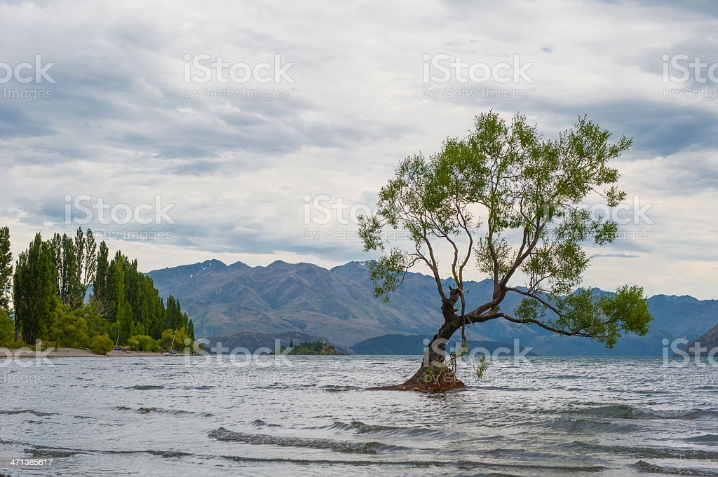 Single tree standing in the lake stock photo