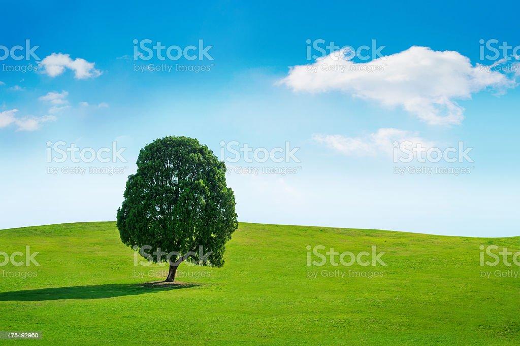 Single tree,Tree in field stock photo