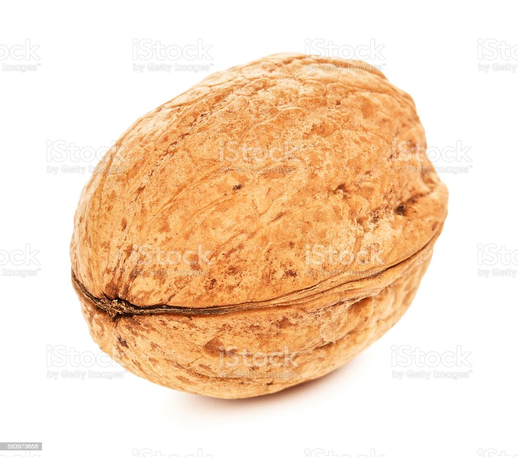 Single Walnut In A Shell stock photo