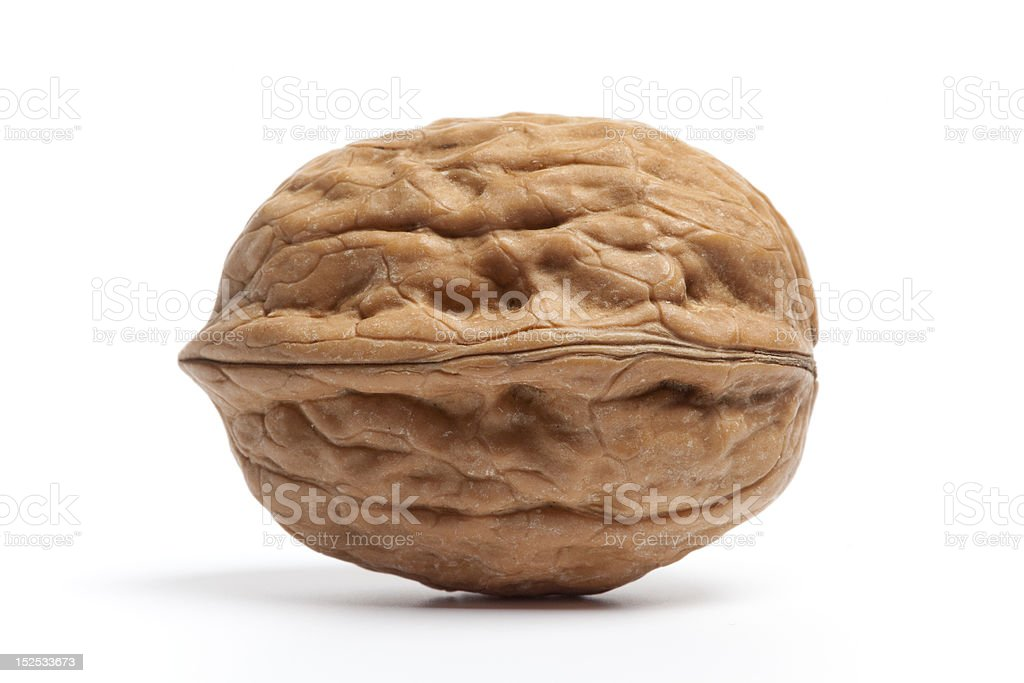 Single whole  Walnut stock photo