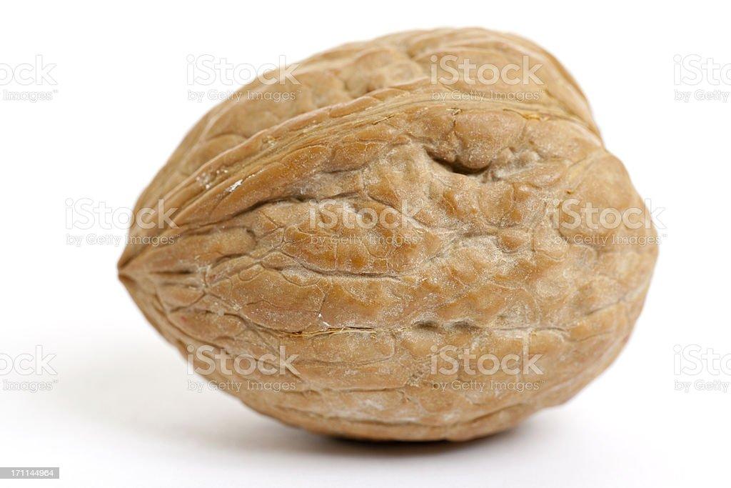 single whole walnut royalty-free stock photo