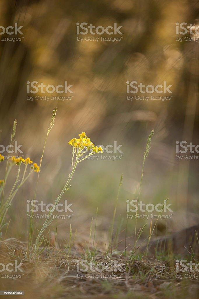 Single Yellow Flowers stock photo