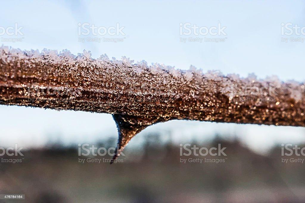 singolo ramo ricoperto dalla brina stock photo