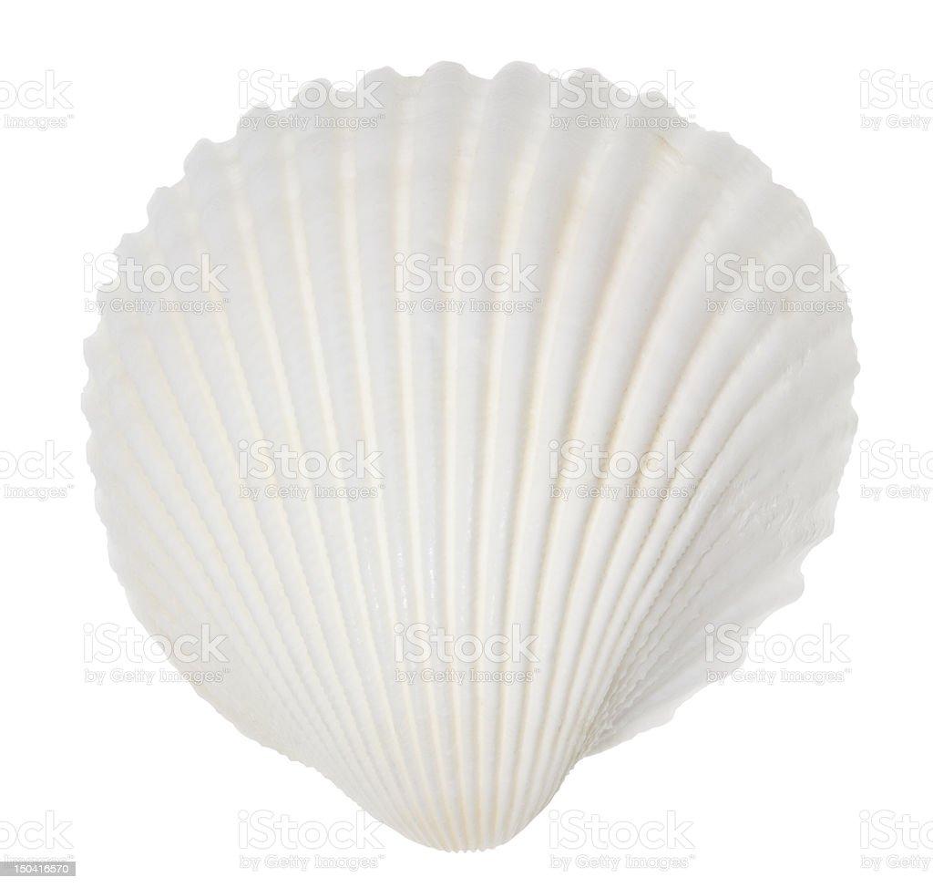 A singular white ocean shell on white stock photo