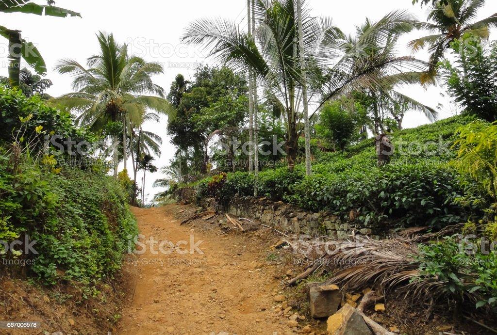 Sinharaja Forest Reserve (Rain forest). National park. Wild nature of Sri Lanka. Southeast Asia stock photo