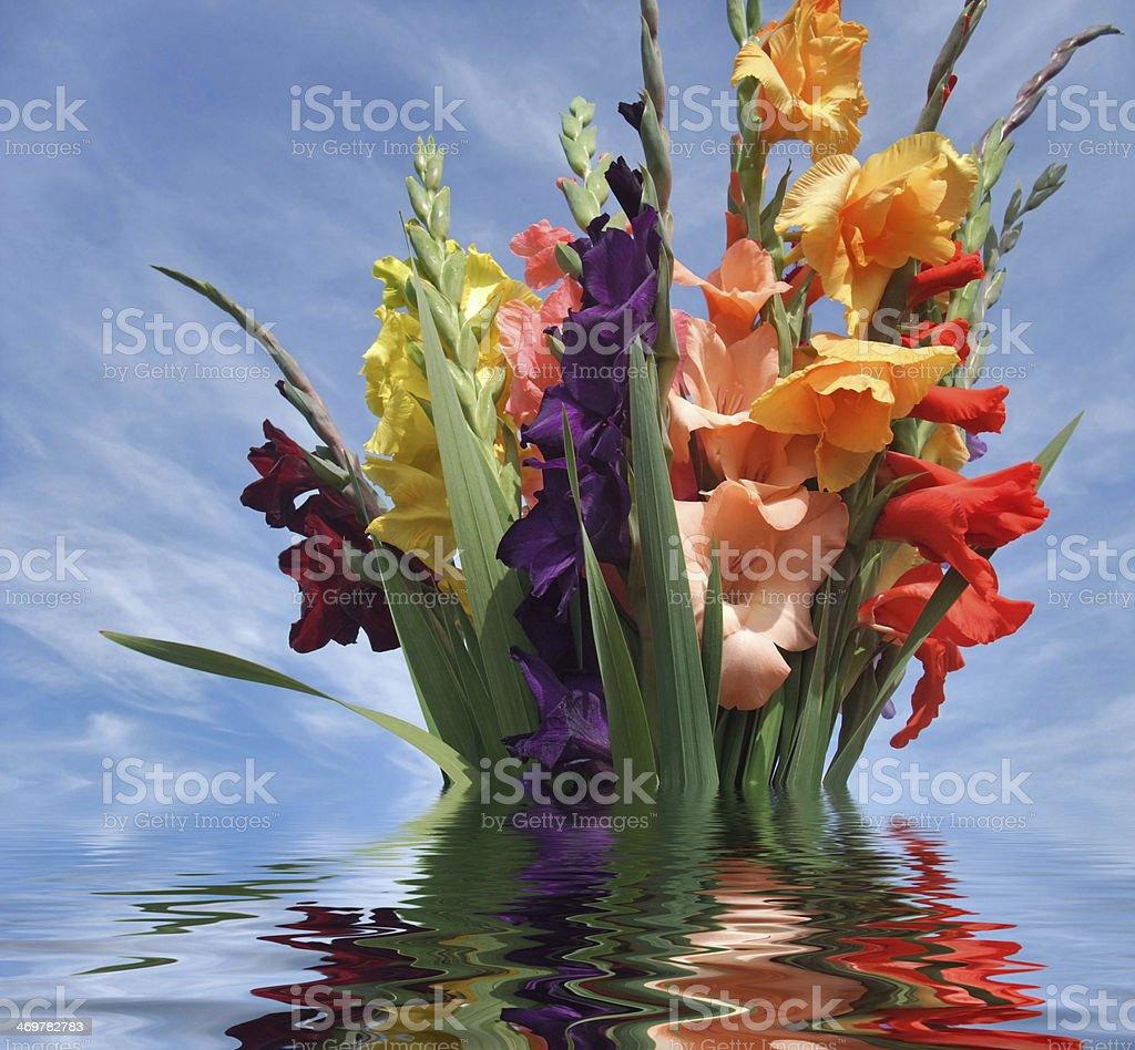 sinking bunch of gladioli flowers stock photo
