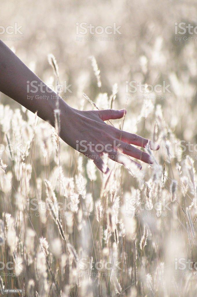 Sintiendo la hierba con la mano en una tarde de relax stock photo