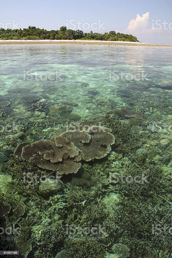 sipadan island coral reef sabah borneo royalty-free stock photo