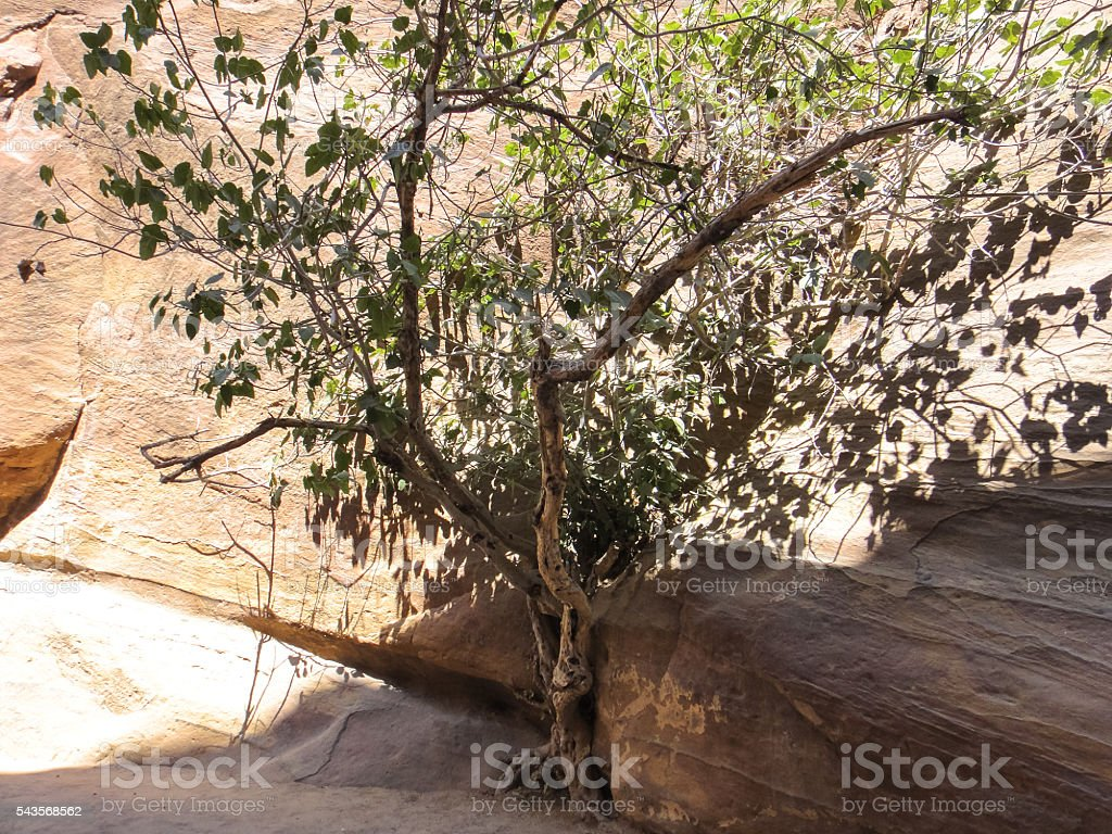 Siq canyon. Middle East stock photo