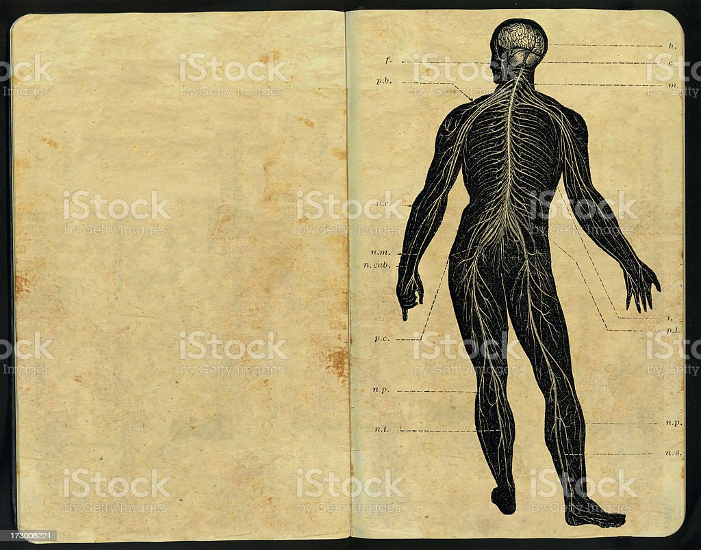 Sistema nervioso Sketch Pad stock photo