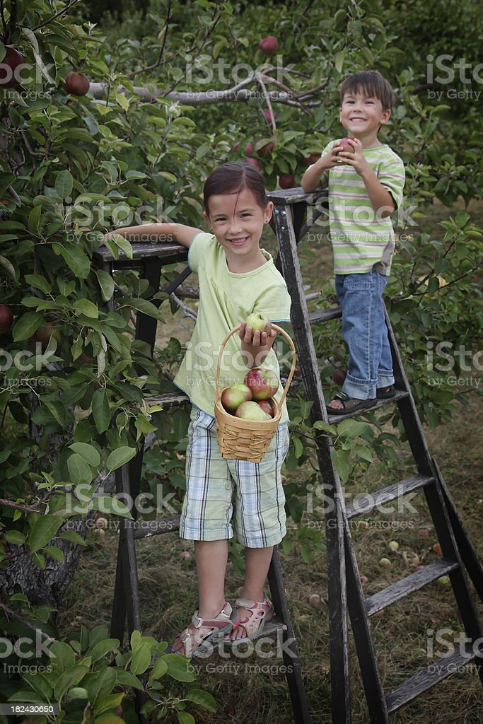 Sister and brother in an orchard royalty-free stock photo
