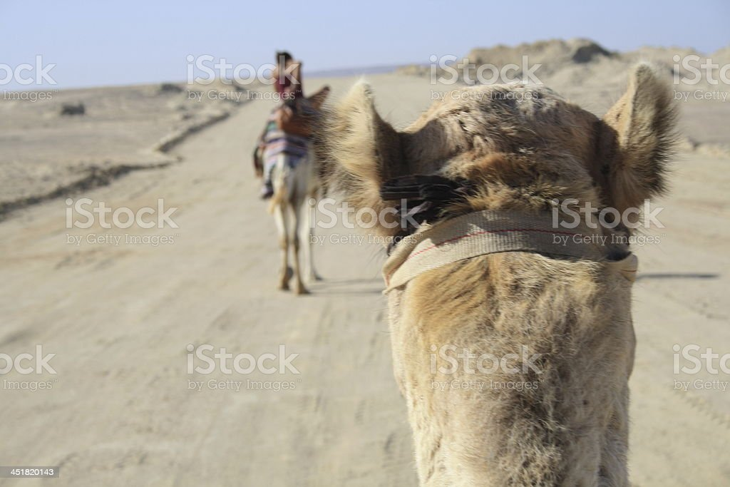 sit on the camel stock photo