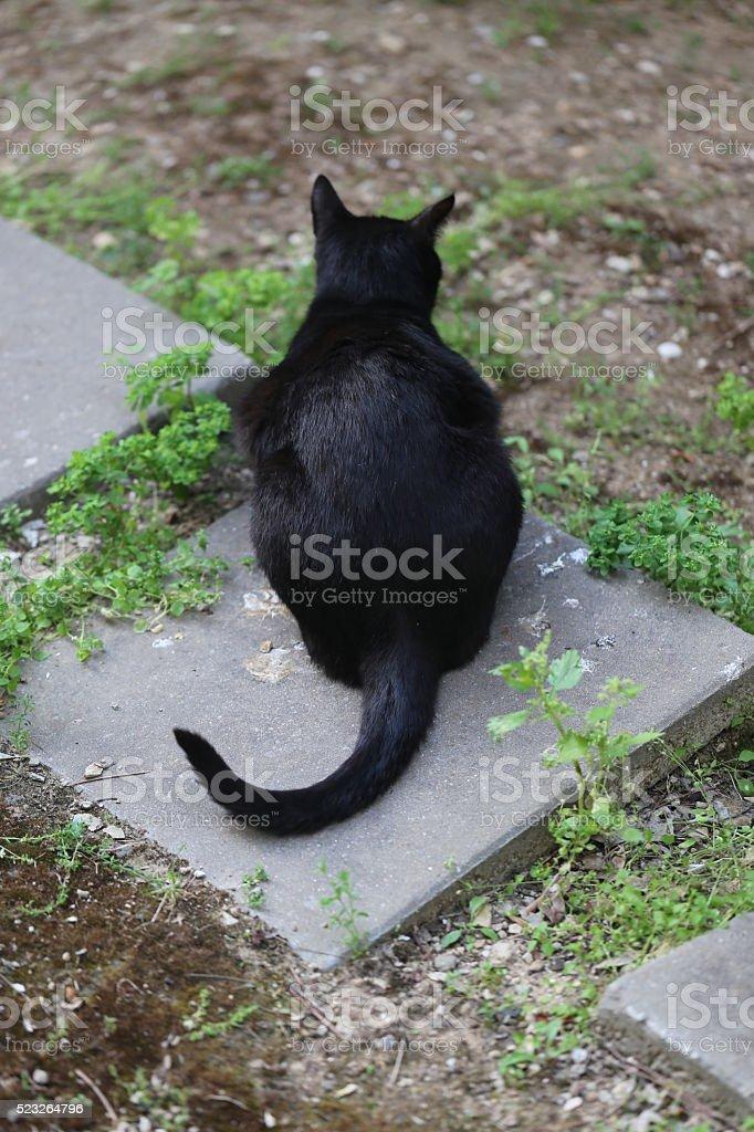 Sitting Cat Back stock photo