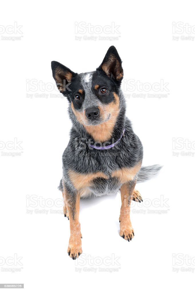 Sitting Dog stock photo
