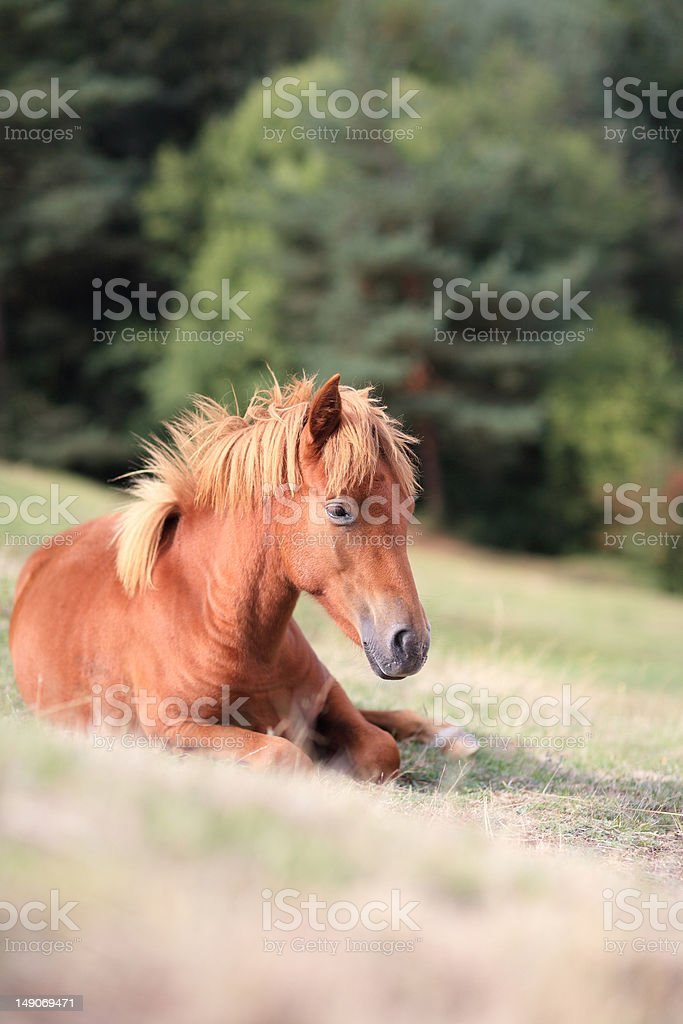 sitting horse stock photo
