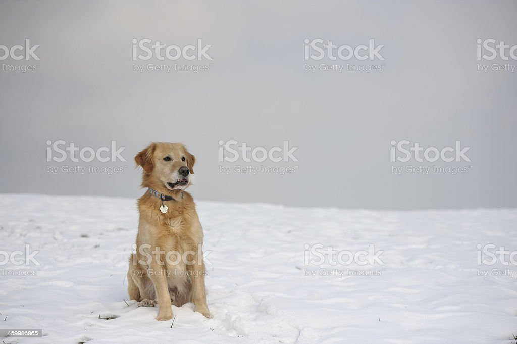 Sitting in snow royalty-free stock photo