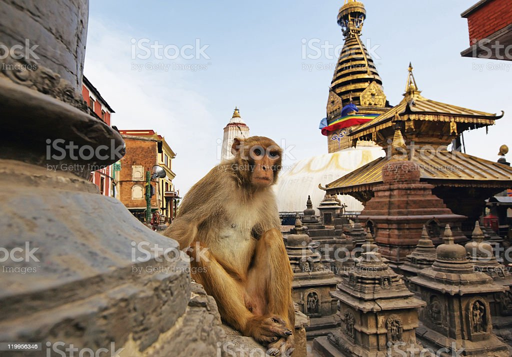 Sitting monkey on Swayambhunath temple in Kathmandu, Nepal stock photo