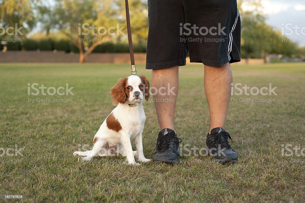 Sitting Puppy on Leash stock photo