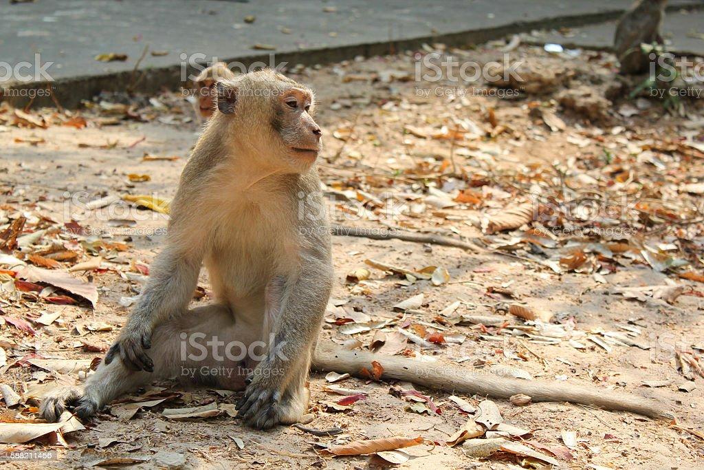 sitting relaxation monkey royalty-free stock photo