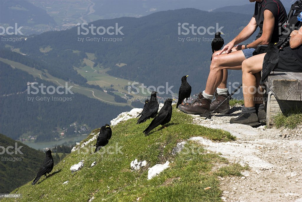 Sitting with Birds on Alp Top royalty-free stock photo