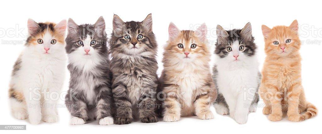six cute kitten in a row stock photo