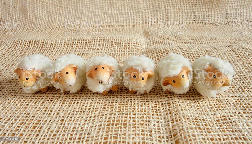Six cute sheep in the farm stock photo