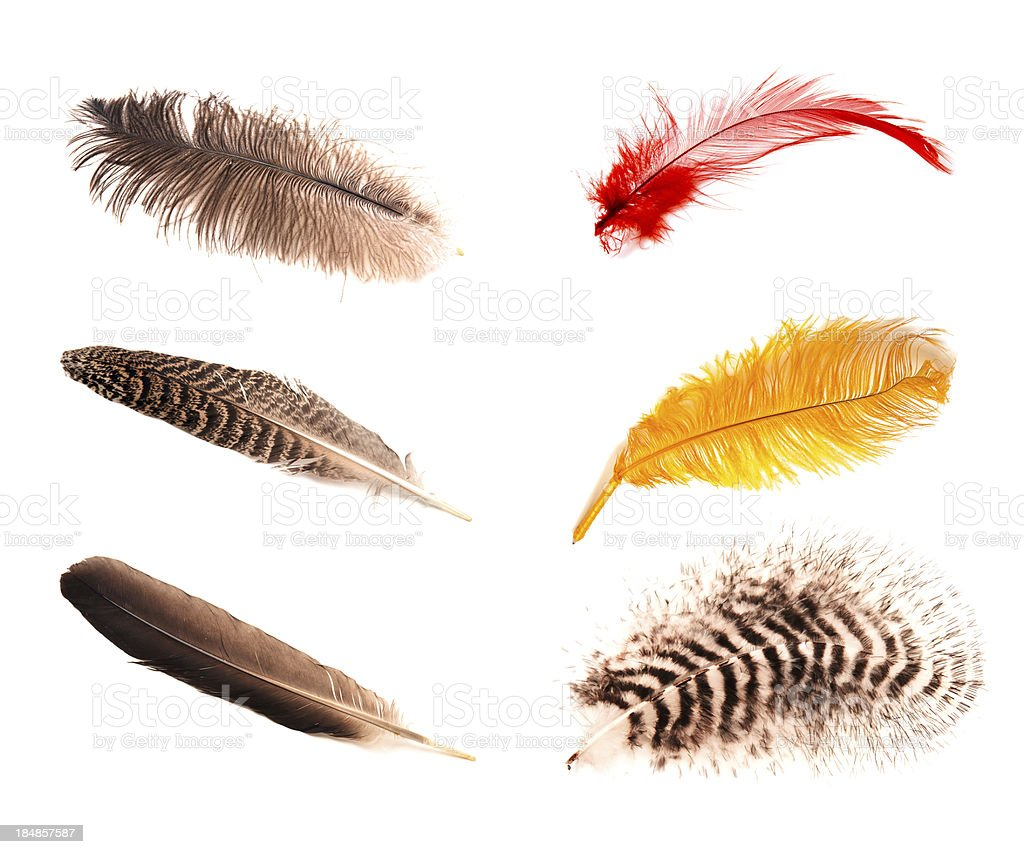 Six different feathers. stock photo