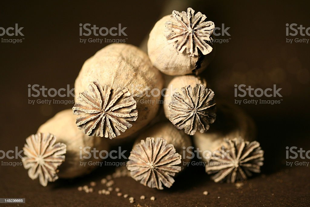 Six dried poppies in a triangle formation. royalty-free stock photo