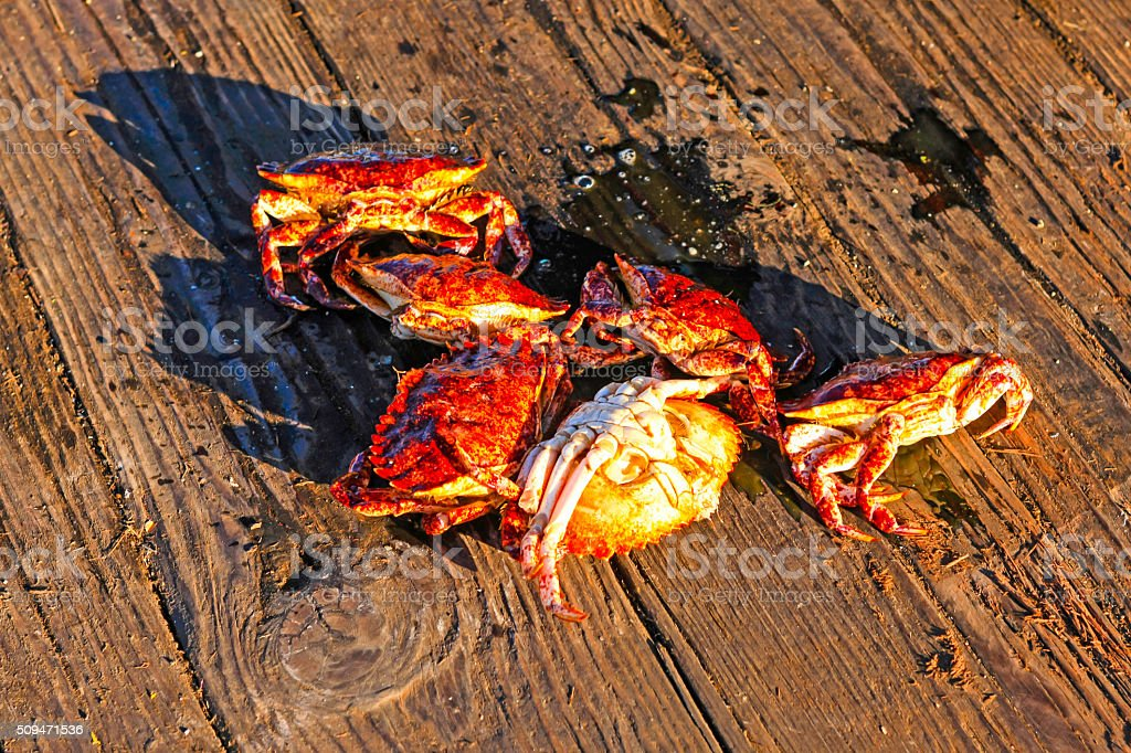 Six Dungeness crabs on the Santa Barbara commercial fishing pier stock photo