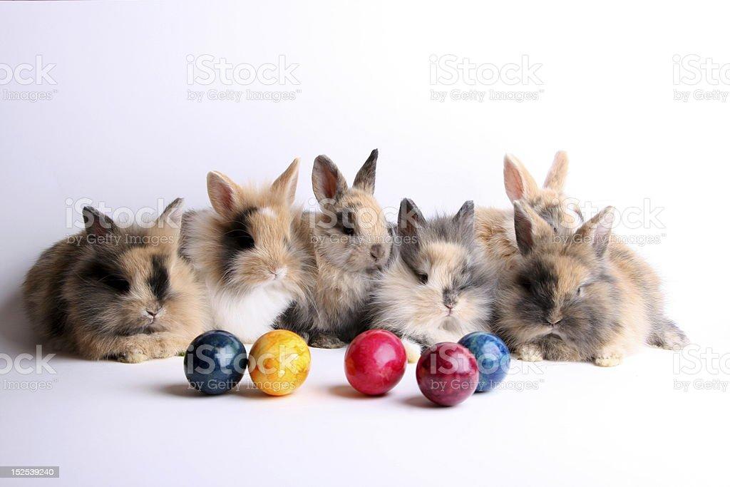 Six easter rabbits stock photo