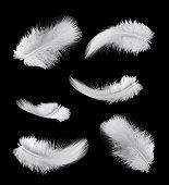 six feathers