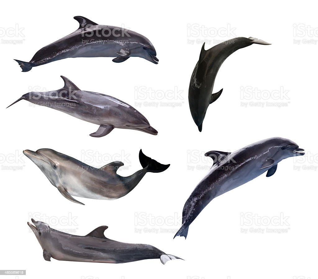 six grey doplhins isolated on white stock photo