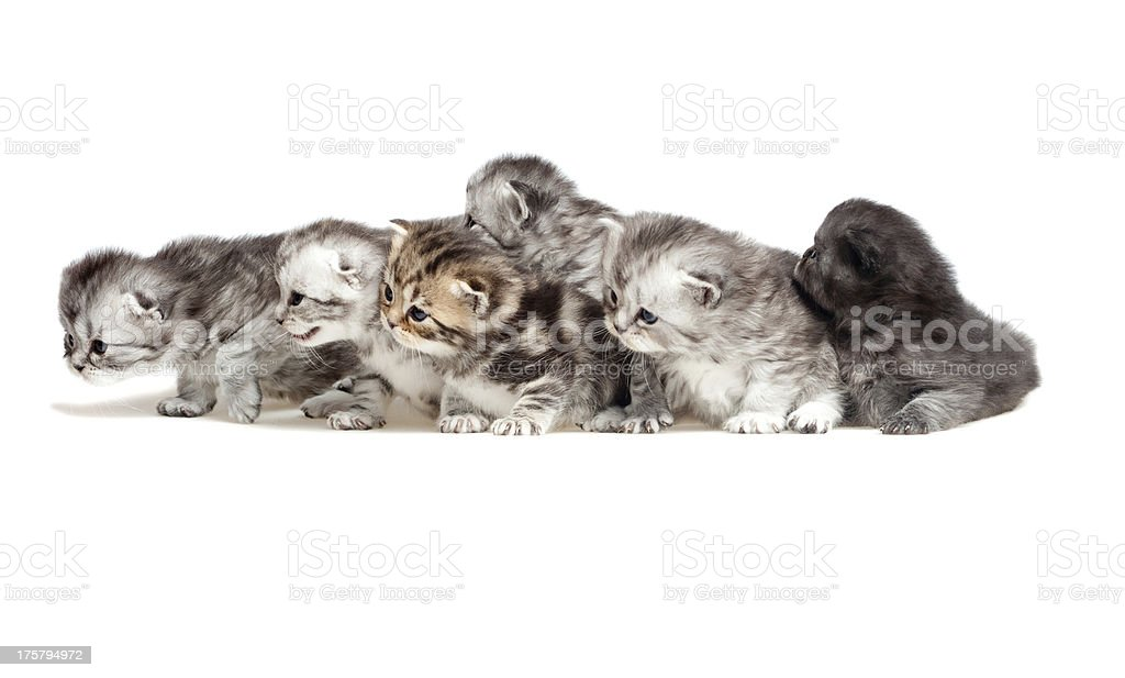 Six little kitten stock photo
