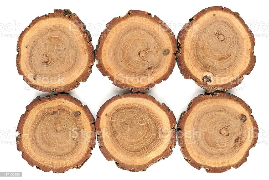 Six oak split with growth rings and bark stock photo