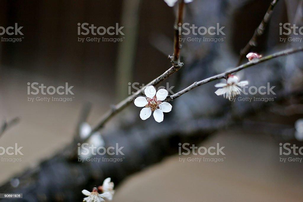 Six Petals royalty-free stock photo