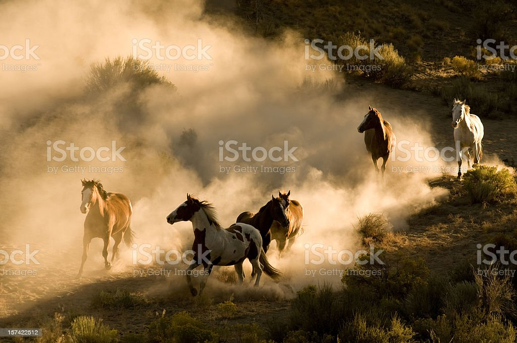 Six Wild Horses running across desert-kicking up dust stock photo