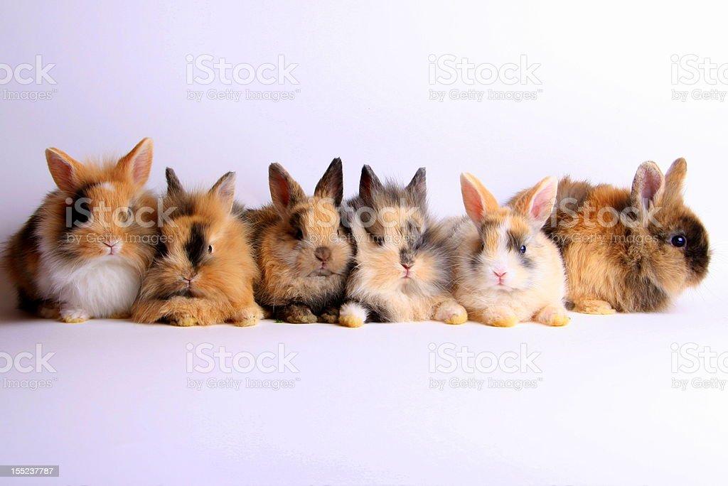 Six young rabbits stock photo