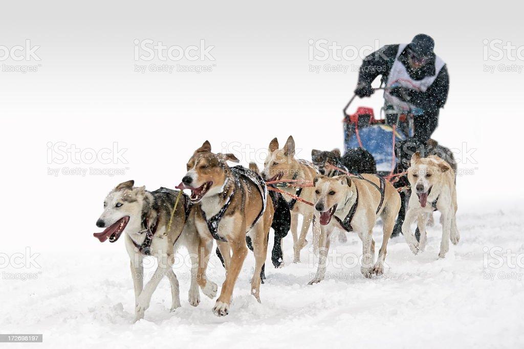 Six-Dog sledding competition race stock photo