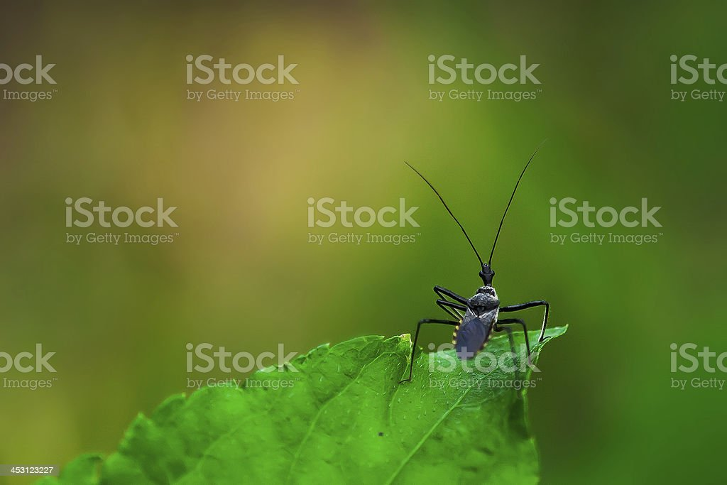 Six-legged insects. royalty-free stock photo