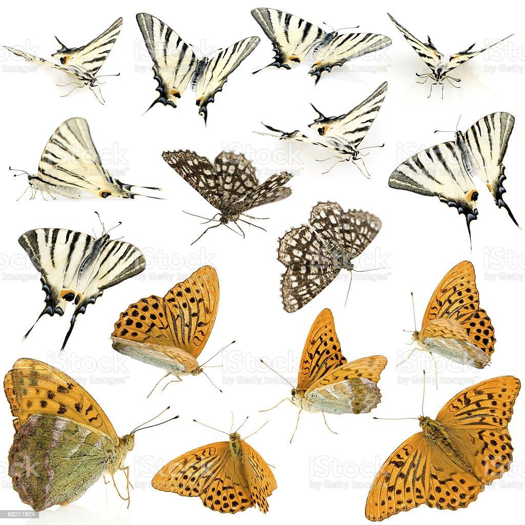 sixteen butterflies stock photo