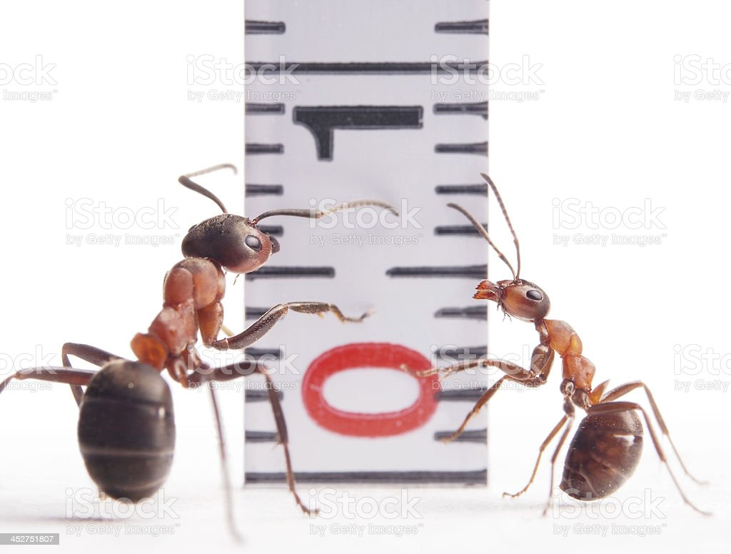 size matters, ants and centimeter stock photo