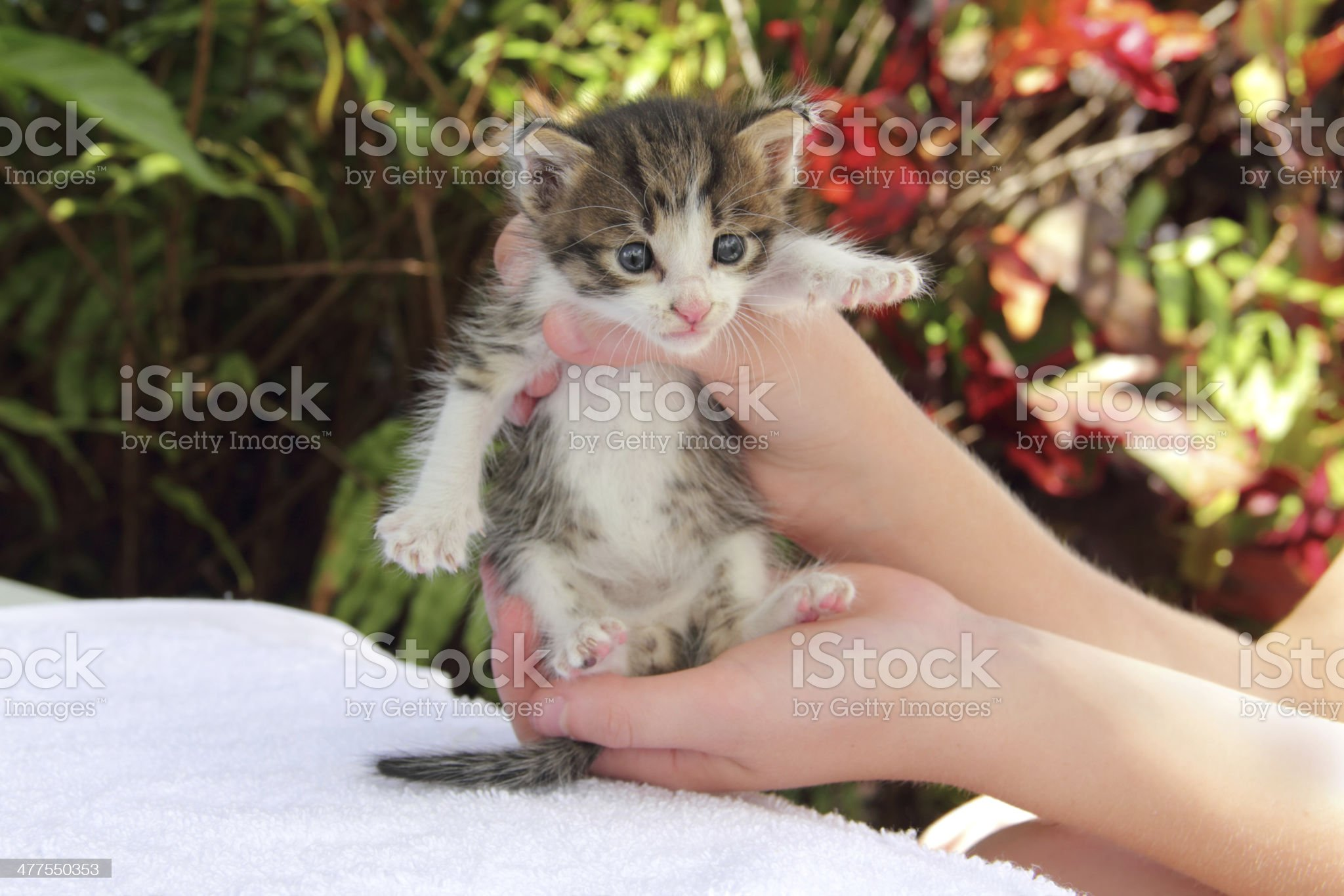 size of a kitten royalty-free stock photo